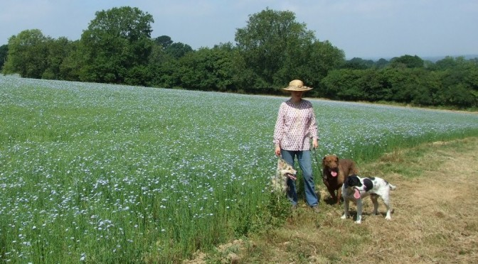 Dogs and linseed F